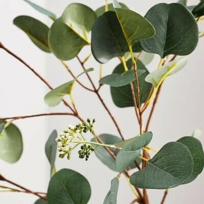 New Zealand Silver Eucalyptus dollar tree