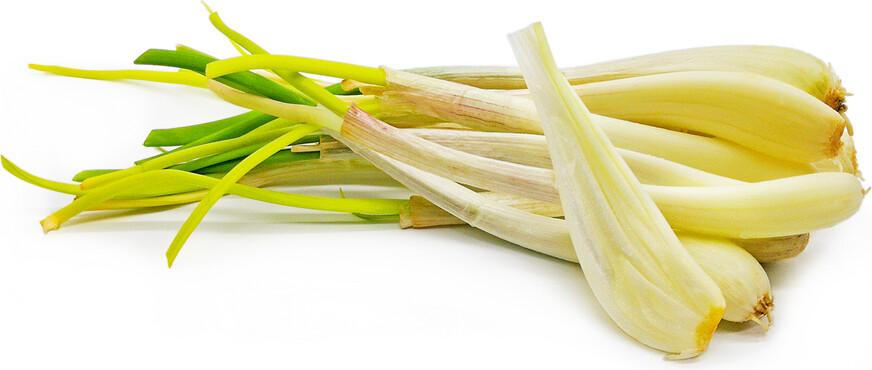 Allium chinense Rakkyo Cu Kieu