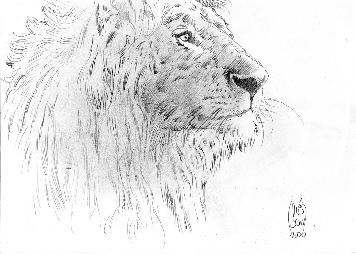 Lion portrait - Croquis préparatoires Akarad 2 par François PLISSON