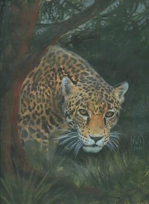 Jaguar en forêt de Vilcabamba.