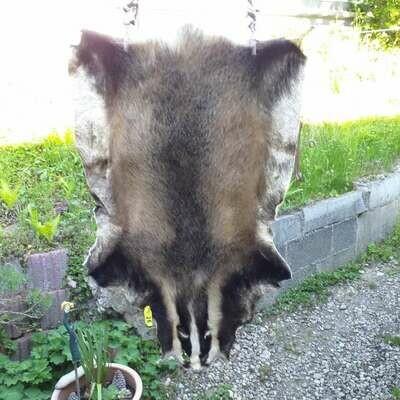 барсучий мех из альпийской страны