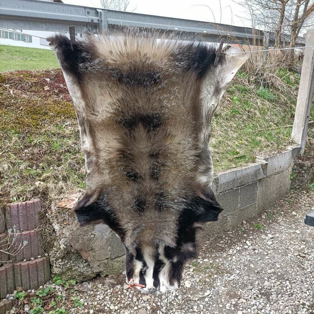 Барсучий мех из альпийской страны традиционно загорелый
