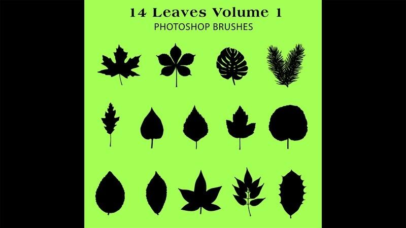 Photoshop Brushes - 14 Leaf silhouette Brushes Volume 1