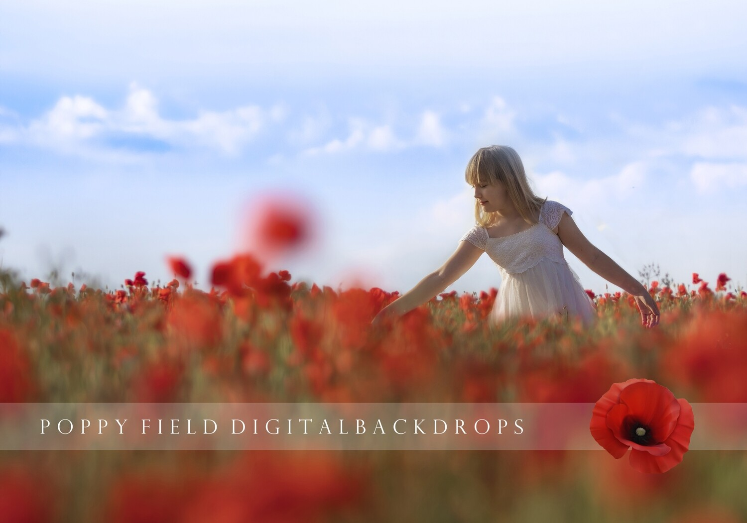 24  Summer Creamy Poppy Field Digital backdrops, digital background, poppy backgrounds