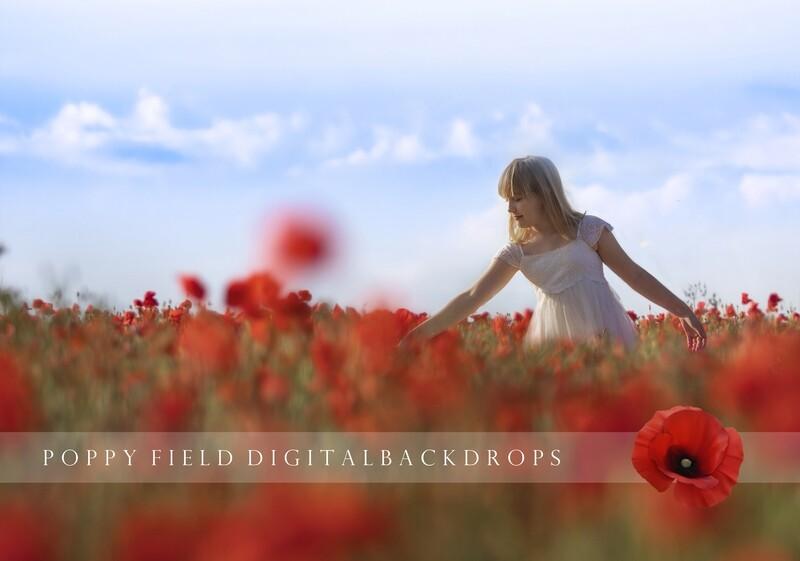 24  Summer Creamy Poppy Field Digital backdrops, digital background, poppy backgrounds