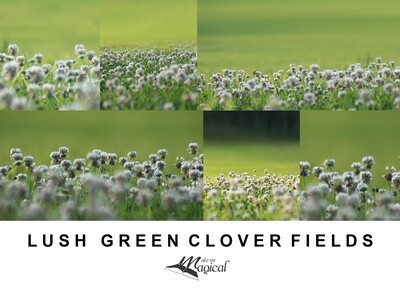 Digital Backdrop | Digital Background | Lush green clover fields pack x 6 backgrounds by Makememagical
