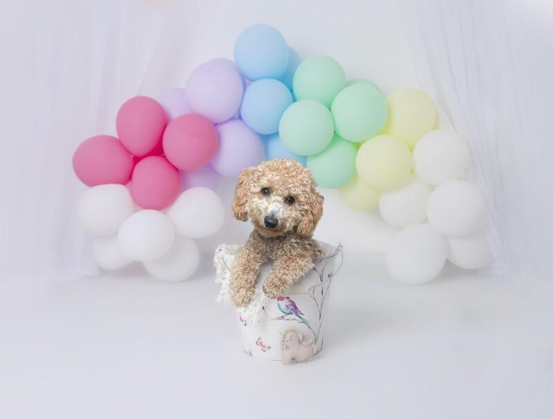 Rainbow Baby Newborn Digital - Little Dreamers Photography