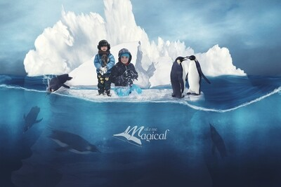 Digital Background | Digital Backdrop | Winter Backdrop | Iceberg Background | Penguin Background | Polar Backdrop | Ocean Backdrop | Snow
