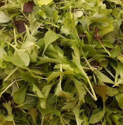 Fall Salad Mix