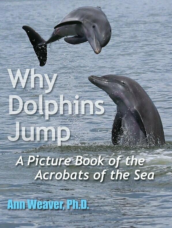 DestinationVinyl Dolphin Pod Aimant Famille Dauphins B/éb/é Animal Sauvage Oc/éan Cadeau # 8434