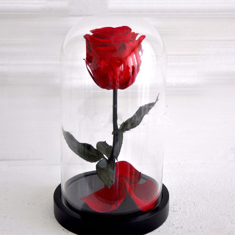Роза в колбе Cтандарт