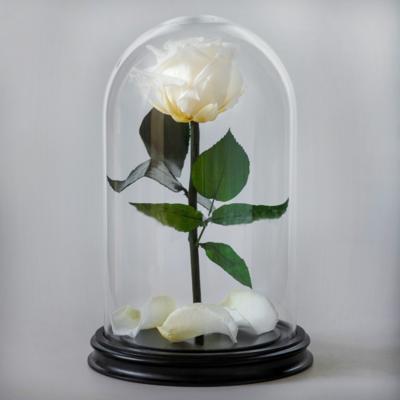 Роза в колбе Макси