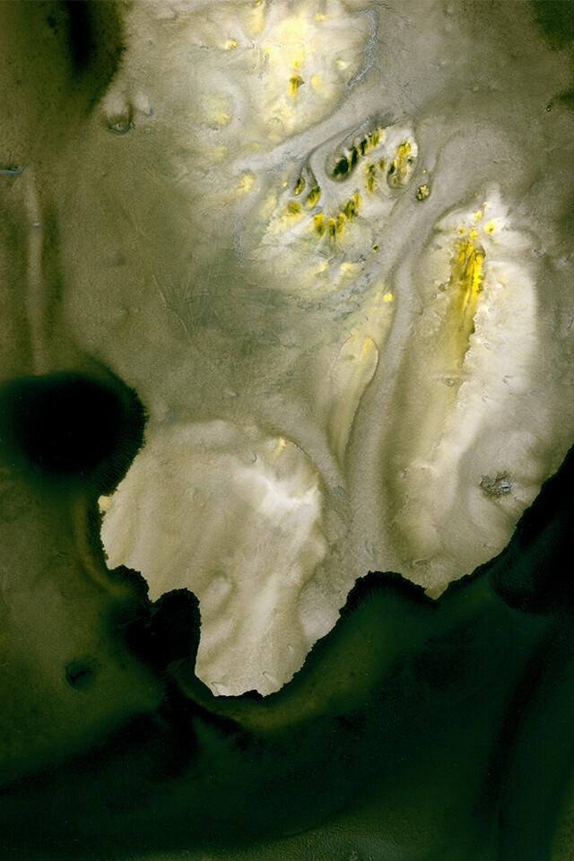 Shoreline Poison 11x14 Giclee Print