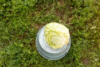 Cabbage Green Organic/each
