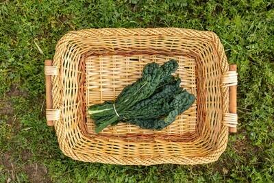 Greens Kale Tuscan/Lacinato Organic/bunch