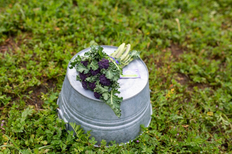 Broccolini (Baby Broccoli) Organic/bunch