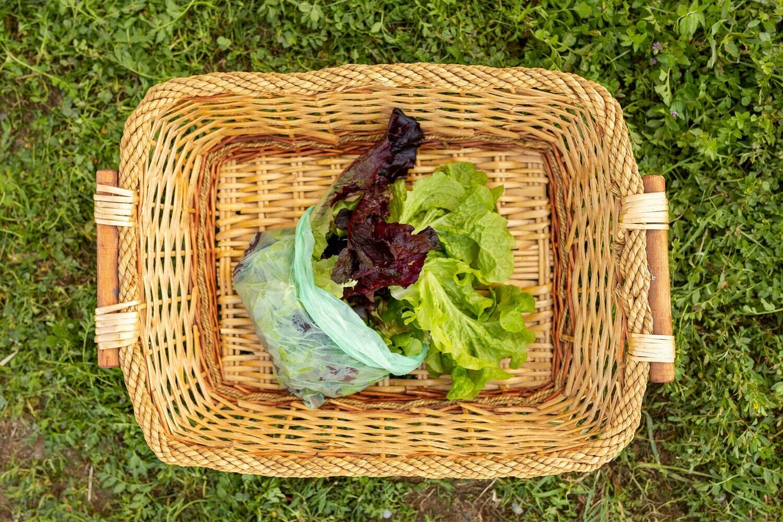 Lettuce Salad Mix 8 oz bag Organic