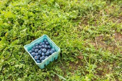 Blueberries Organic/Pint