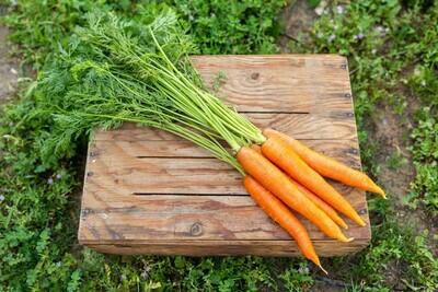 Carrots Nantes Organic/Bunch