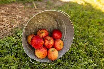 Apples Fuji Organic/lb