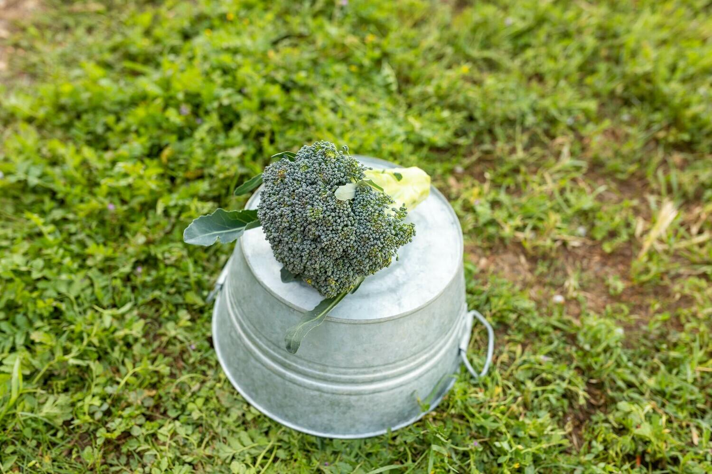 Broccoli Head Organic/each