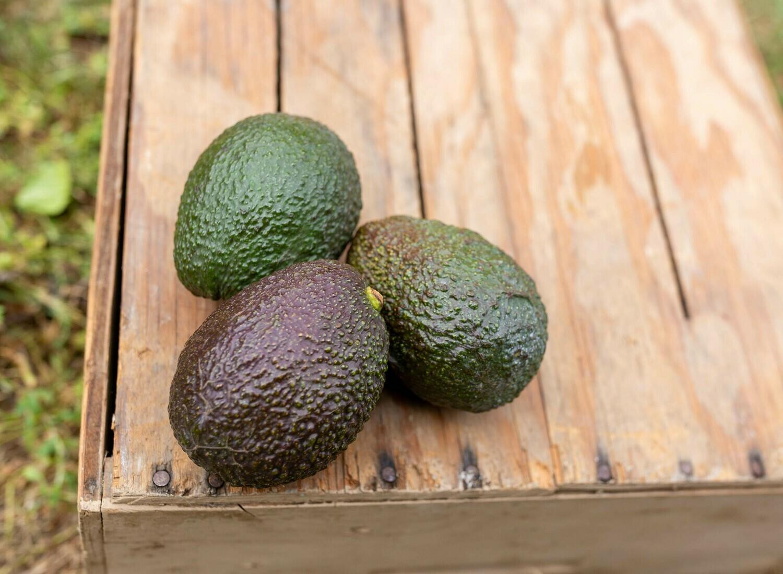 Avocado Hass CA Grown Organic/each
