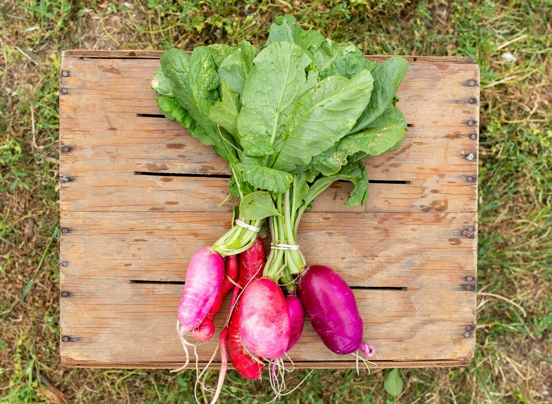Radishes Organic/bunch