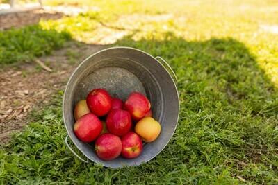 Apples Pink Lady Organic/lb