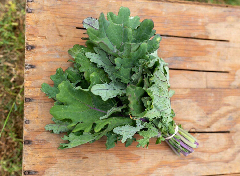 Greens Kale Red Russian Organic/bunch