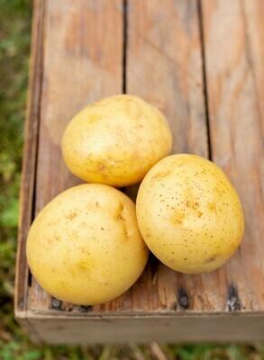 Potatoes Gold Organic/lb