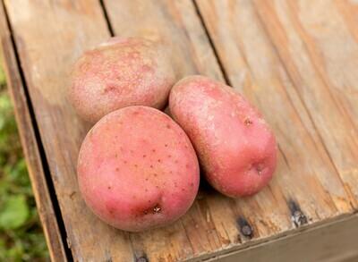 Potatoes Red Organic/lb
