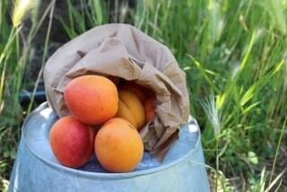 Apricots Organic/lb