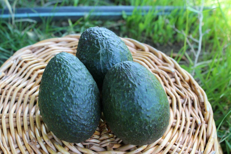 Avocado Hass extra ripe Organic/each