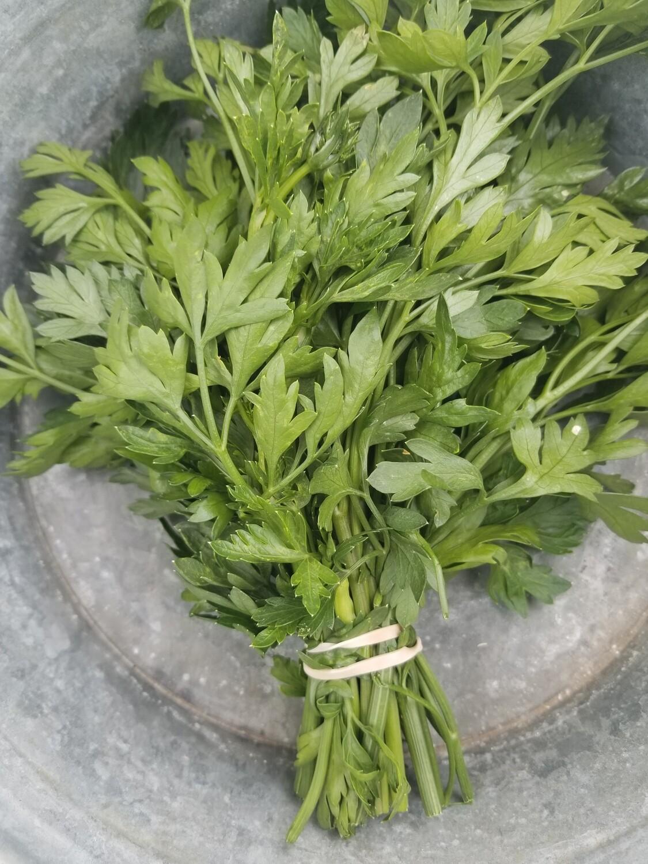Herb Parsley Organic/bunch