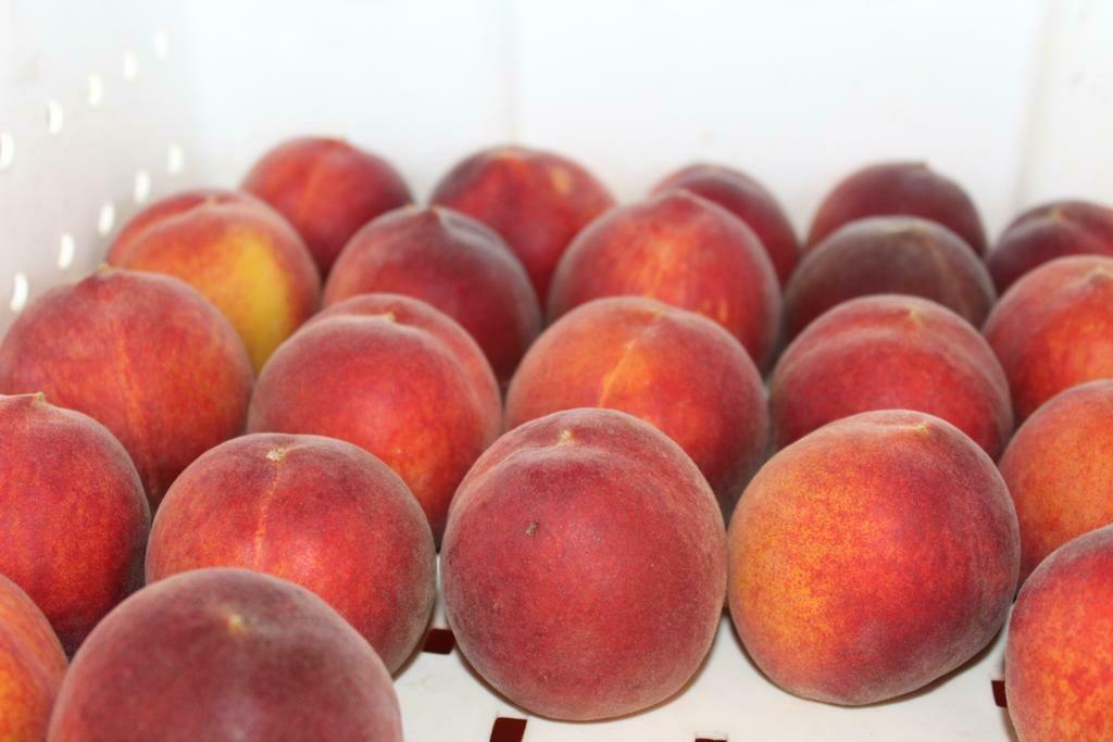 Peaches Yellow Freestone Organic/lb