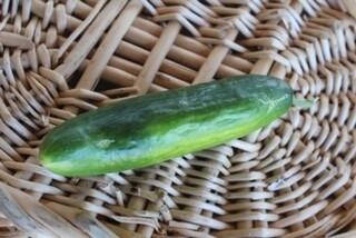 Cucumbers Salad Slicers Fair Trade Organic/Each