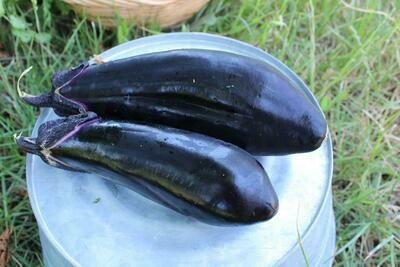 Eggplant Japanese Organic/lb