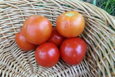Tomatoes Early Girls/lb