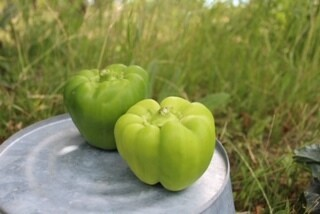 Peppers Bell Green Organic 2 for