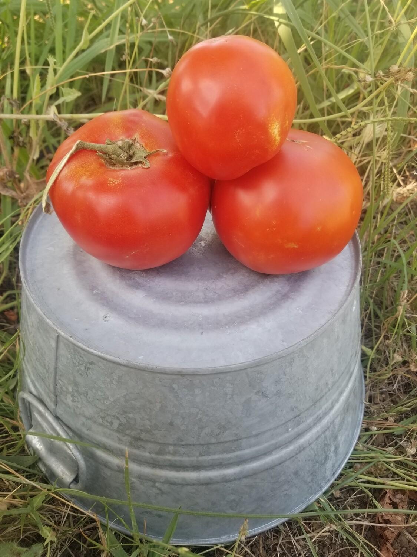 Tomatoes Slicer Organic lb