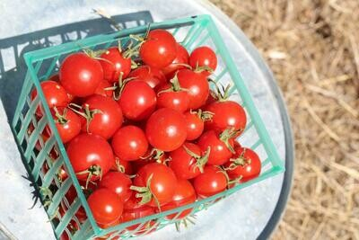 Tomatoes Cherry Red/basket