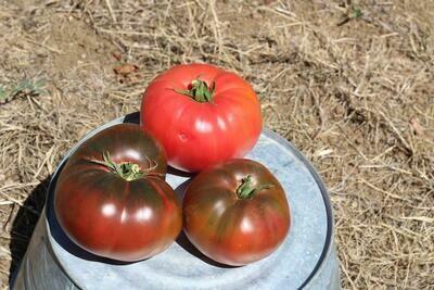 Tomatoes Heirloom/lb