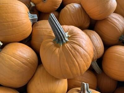 Pumpkins Small