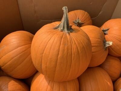 Pumpkin Medium