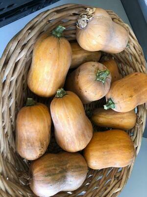 Squash Winter Honeynut Organic/lb