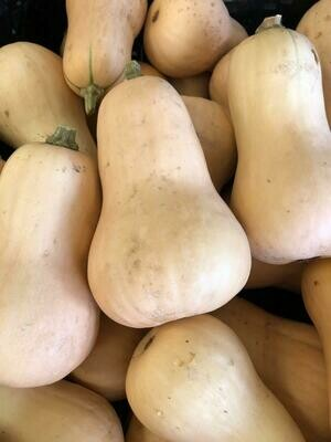 Squash Winter Butternut Organic/lb