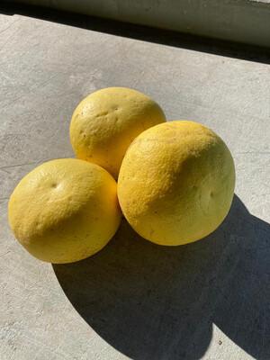 Grapefruit White/each