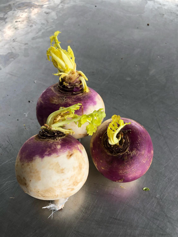 Turnips Purple Top Organic/lb