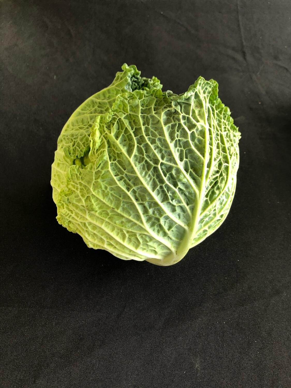 Cabbage Savoy Organic/each