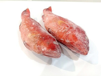 Red Suno (Leopard Coral Grouper) for Export 1kg